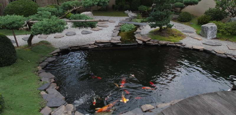Koi fish pond tips sweeney feeders for Koi pond liner