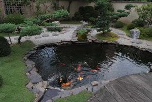 Get the Best Koi Fish Pond Tips | Top Picks and Koi Feeder Tips