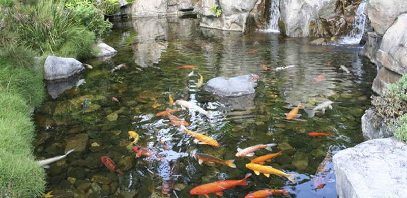 Backyard koi pond designs sweeney feeders for Yard pond filters
