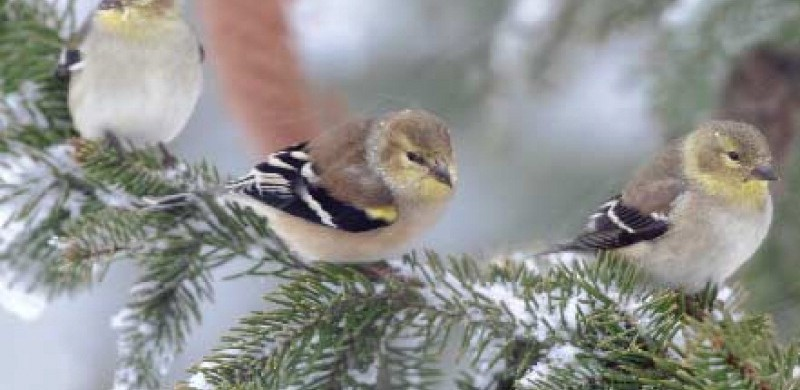 Winter Bird Feeding Advice | Sweeney Feeders