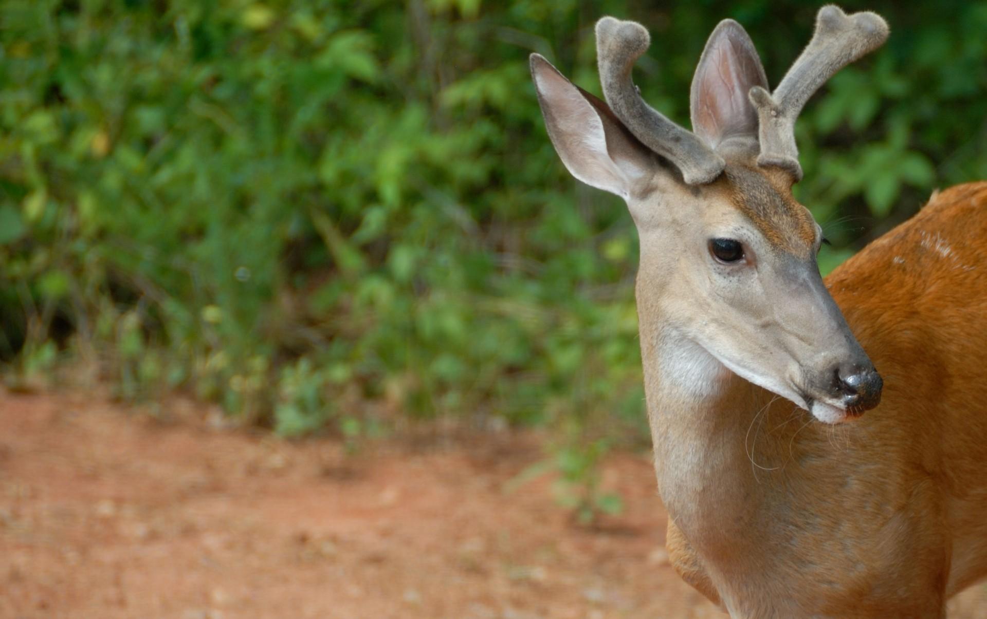 mfa feeder lights activated ip com led moultrie radius deer walmart motion w timer hog