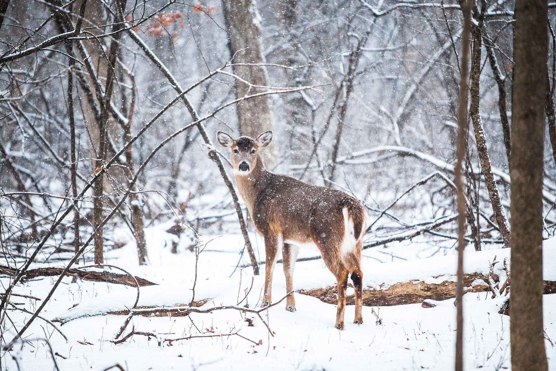 How Deer And Wildlife Feeders Can Be Useful For Your Yard