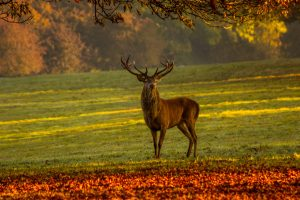 how to get deer to come to your feeder