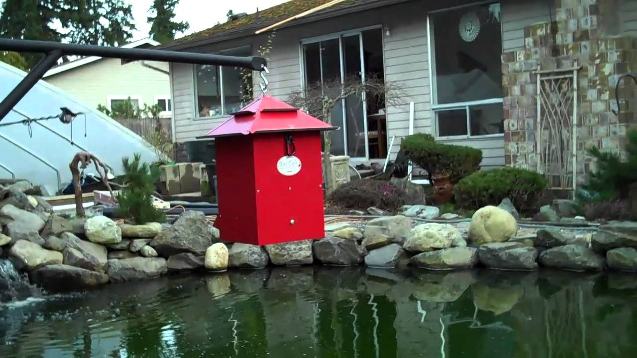 Recreational Fish Feeders for Enthusiasts