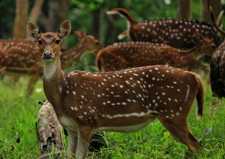 Deer Feeder Accessories - Timers - Varmint Guards - Legs